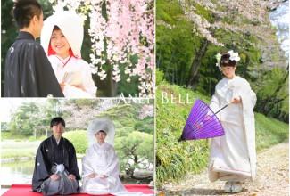 岡山後楽園春の桜ロケーション